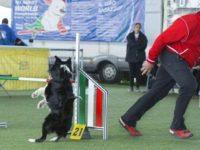 Stage di Agility Dog con Christian Oggioni