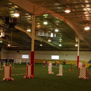 agility camp
